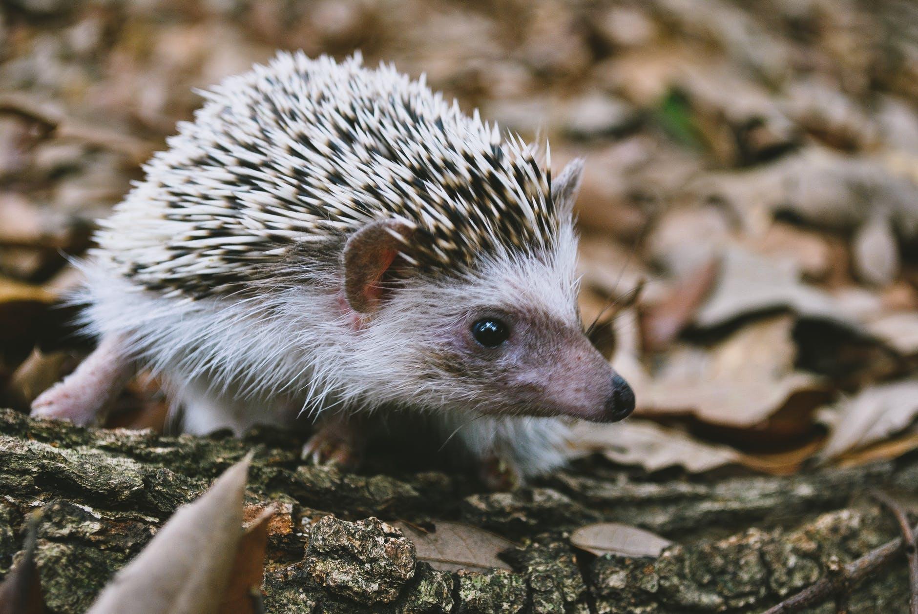 animal cute tree fur